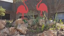 Hire flamingo lawn ornaments for your event